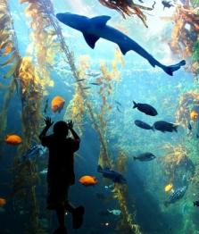 Birch Aquarium in San Diego
