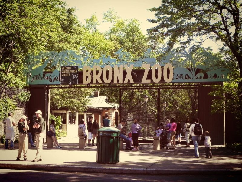 zoo-du-bronx-new-york