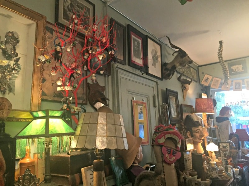 obscura-antiques-oddities