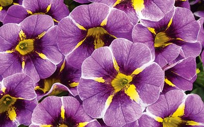 4 ANNUAL BLOOMS THAT WILL PROVIDE YOUR GARDEN WITH COLOUR ALL SEASON