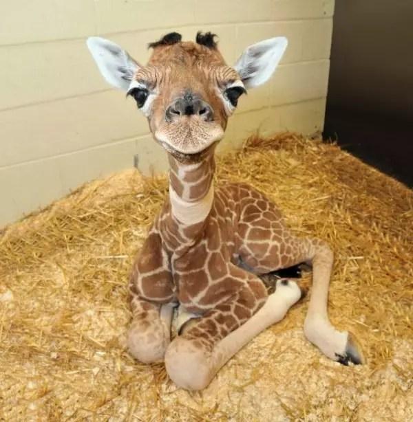 baby-animals-1