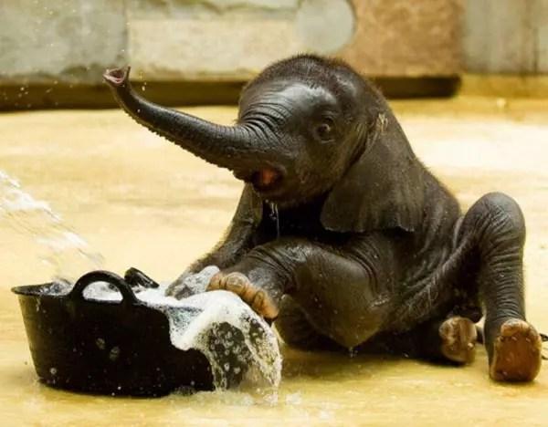 baby-animals-64