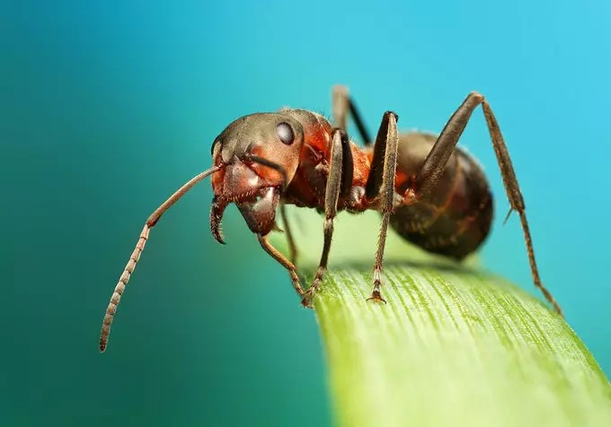 Ant by Ondrej Pakan - Downloaded from 500px_jpg