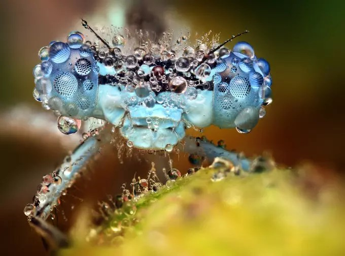 Blue eyes by Ondrej Pakan - Downloaded from 500px