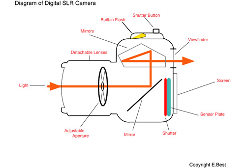 Light and Your Camera   Your Digital SLR