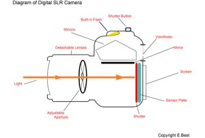 Light and Your Camera | Your Digital SLR