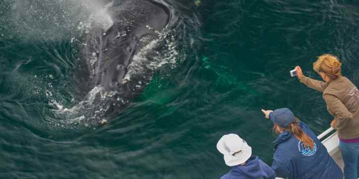 Whale Watching at Big Sur in California