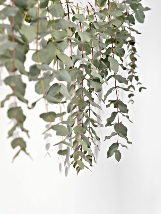 A quick (and easy) DIY eucalyptus garland