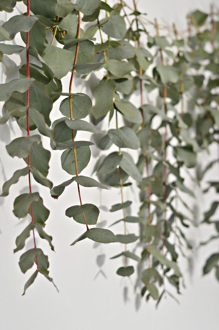 diy-eucalyptus-garland