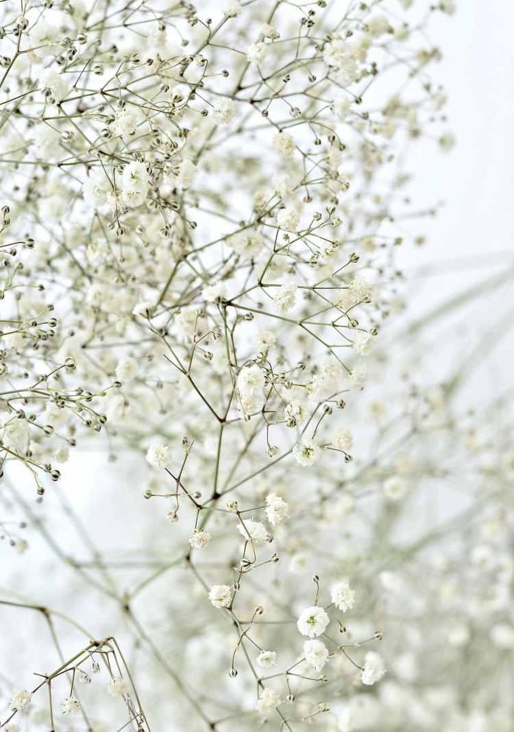 babys breath flower garland diy