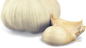 a large head of garlic