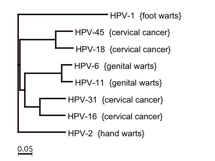 HPV Causes 3 Percent of All Cancer in Women