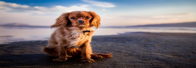 172 Most Popular Male Dog Names In 2019  - Your Dog Cares