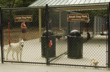 Should I Take My Dog To The Dog Park? — Your Dog's Friend