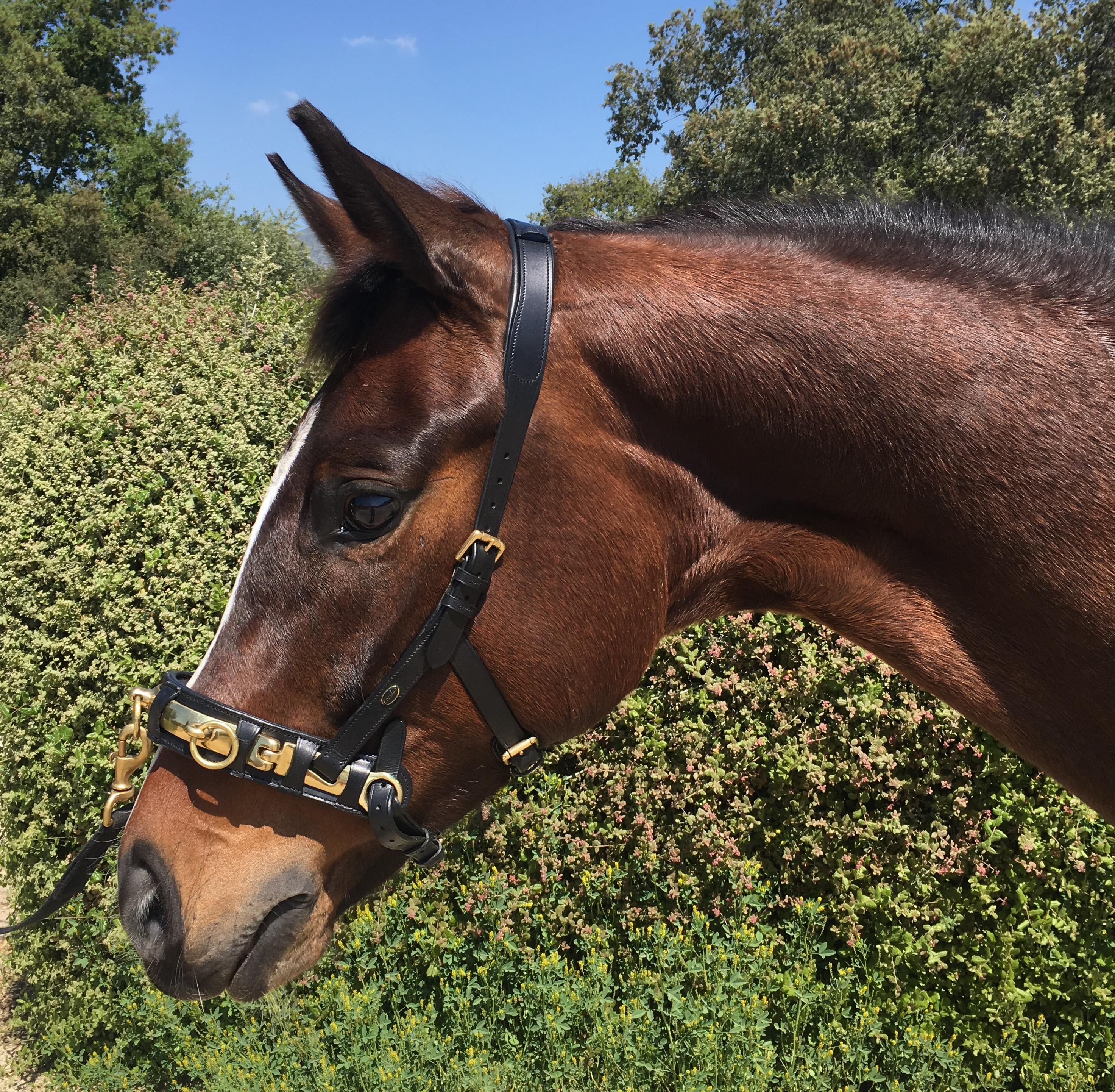 Preserve Your Young Horse S Precious Mouth Yourdressage Org