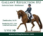 Hilltop-banner_USDF-Your-Dressage_300x250-Mar2020_Gallant-Reflection