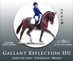 hilltop-banner_usdf_your-dressage_300x250_dec_gallant-reflection
