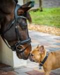"Puppy Love"" by Bob Brandom Photography"