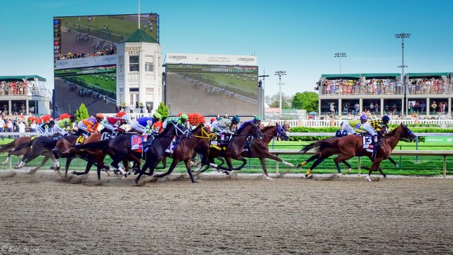 What Happens to the 19 Dead Horses After the Kentucky Derby?