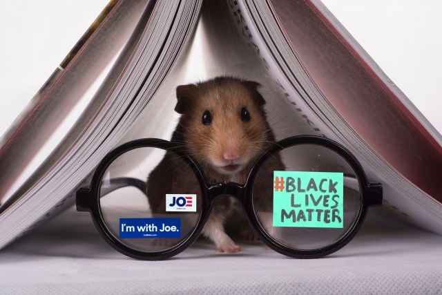 Hamster That Swapped Brains With Dr. Ben Carson in 2015 Supports Joe Biden, Black Lives Matter