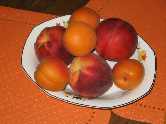 Peaches and Apricots 005