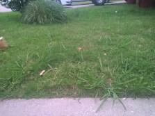 grass-ii