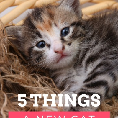 5 Things A New Cat Owner Needs