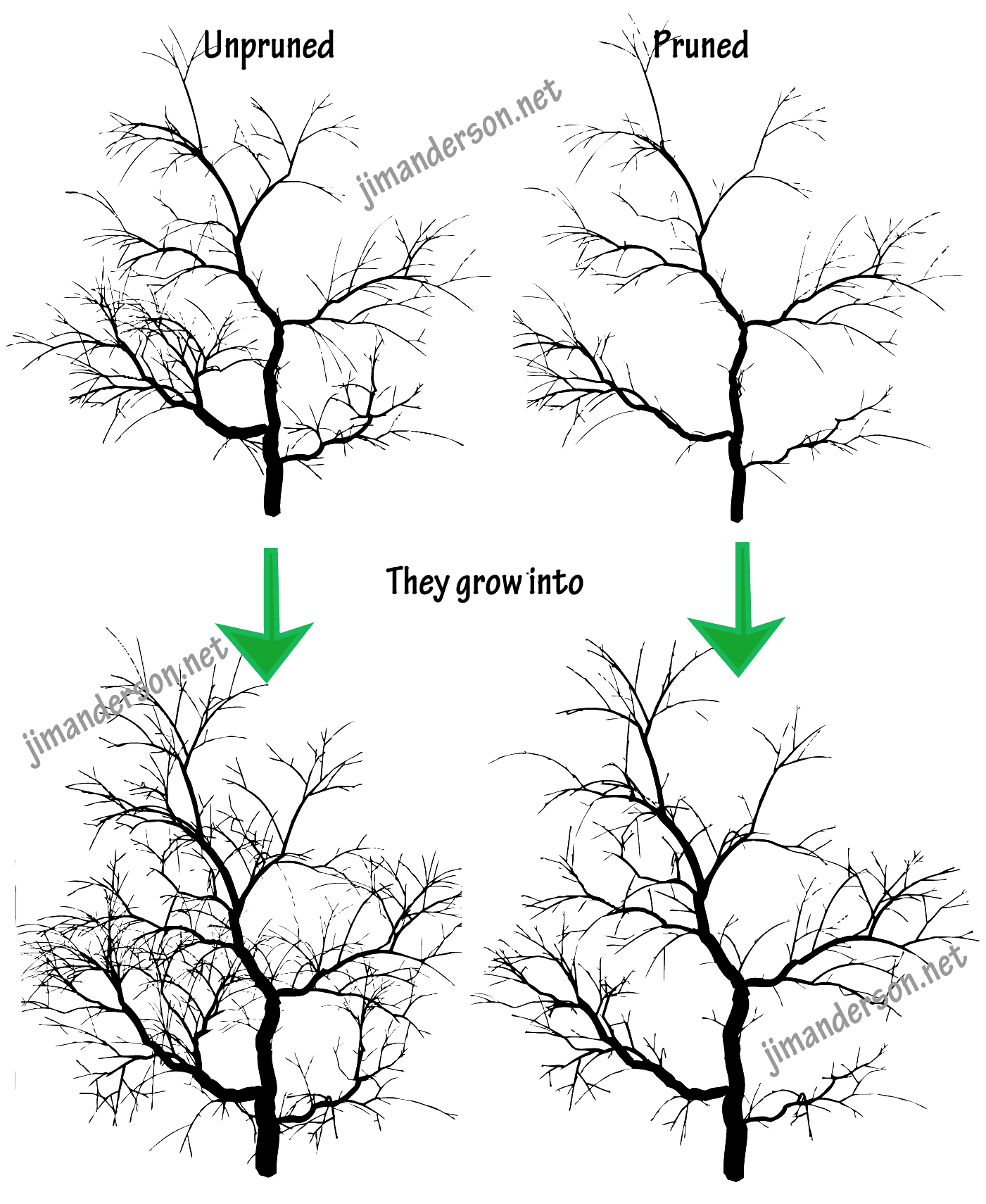 Aesthetic Tree Drawing : aesthetic, drawing, Three, Aesthetic, Pruning