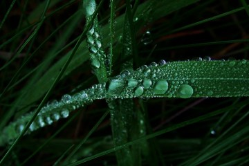 Canva Water Droplets on Green Leaf dark - sustainable stocks