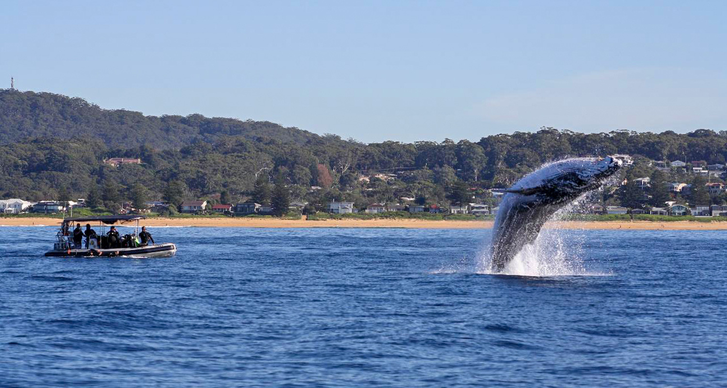 Whale Watching with Terrigal Ocean Tours