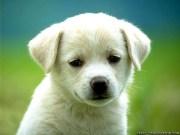 puppysolo