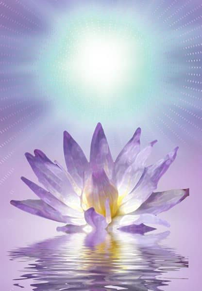 Lotus flower blooming