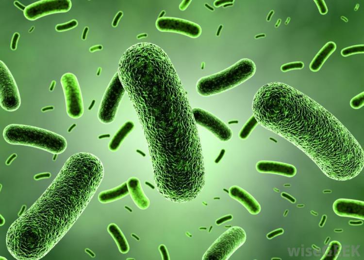 green-bacteria