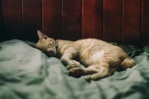 Sleep issues are associated with Chronic fatigue syndrome