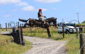 horse jumping a cross country fence