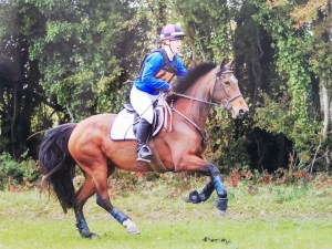 Bay pony cantering across country in Annaharvey