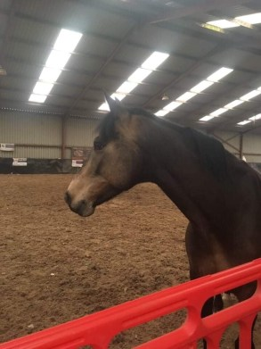 pony enjoying freedom in the indoor school. Looking absolutely beautiful.