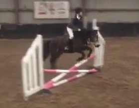 Showjumping competition with Woodpark Dainty.