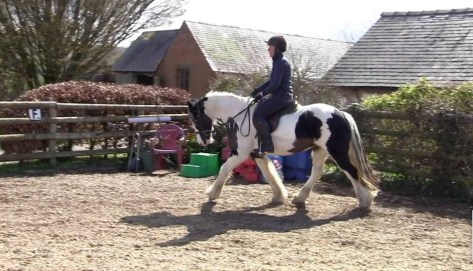Wonderful Ruby!! A piebald pony schooling in an arena.