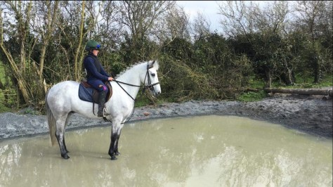 Grey 148 cm pony in a water cross country jump. very calm and no worries in the world