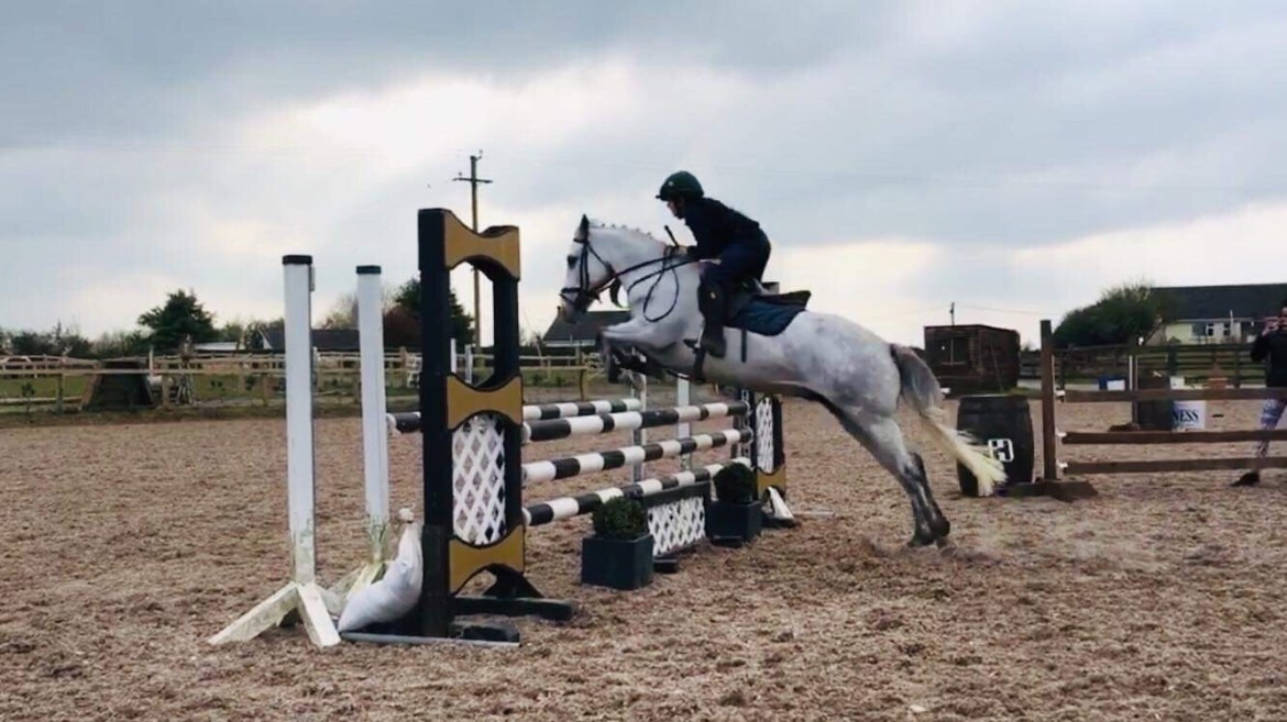 Comers elf a grey pony jumping over a show jumping fence. The pony has a very scopey jump and clears the fence well. this pony has talent