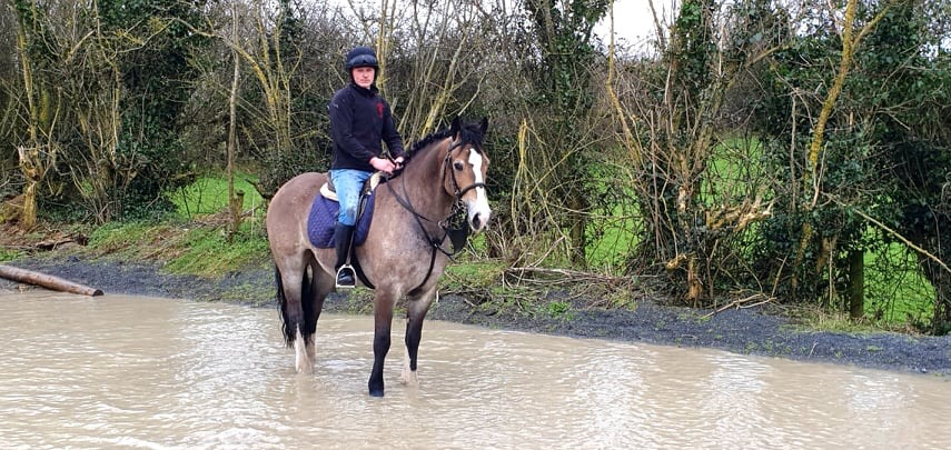 Castledaly Sophie Castledaly Sophie a dun cob born in 2015 standing in water