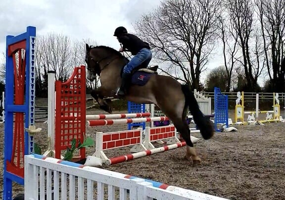 Castledaly Sophie a dun cob jumping a red brick wall