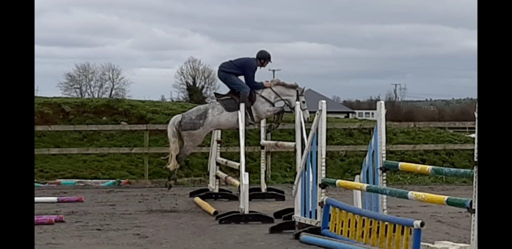 grey connemara pony jumping a big fence