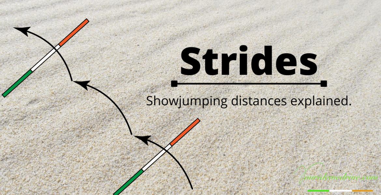 showjumping strides