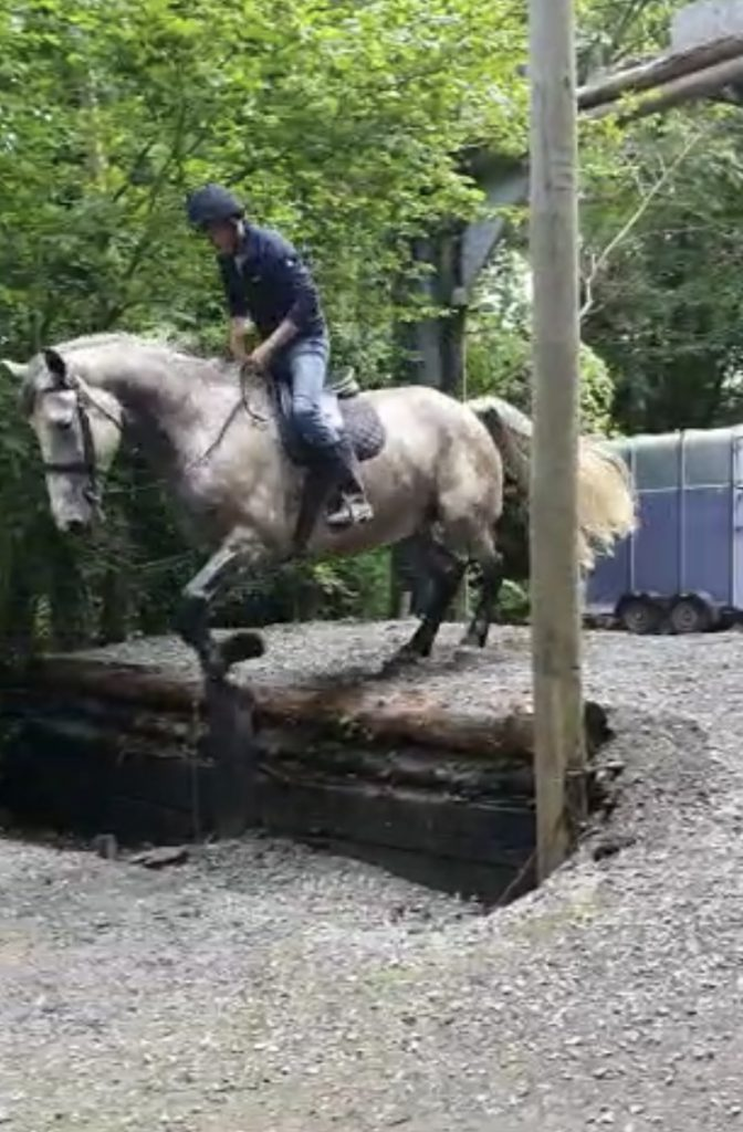 Grey Irish Draught horse by Heigh Ho Silver jumping down