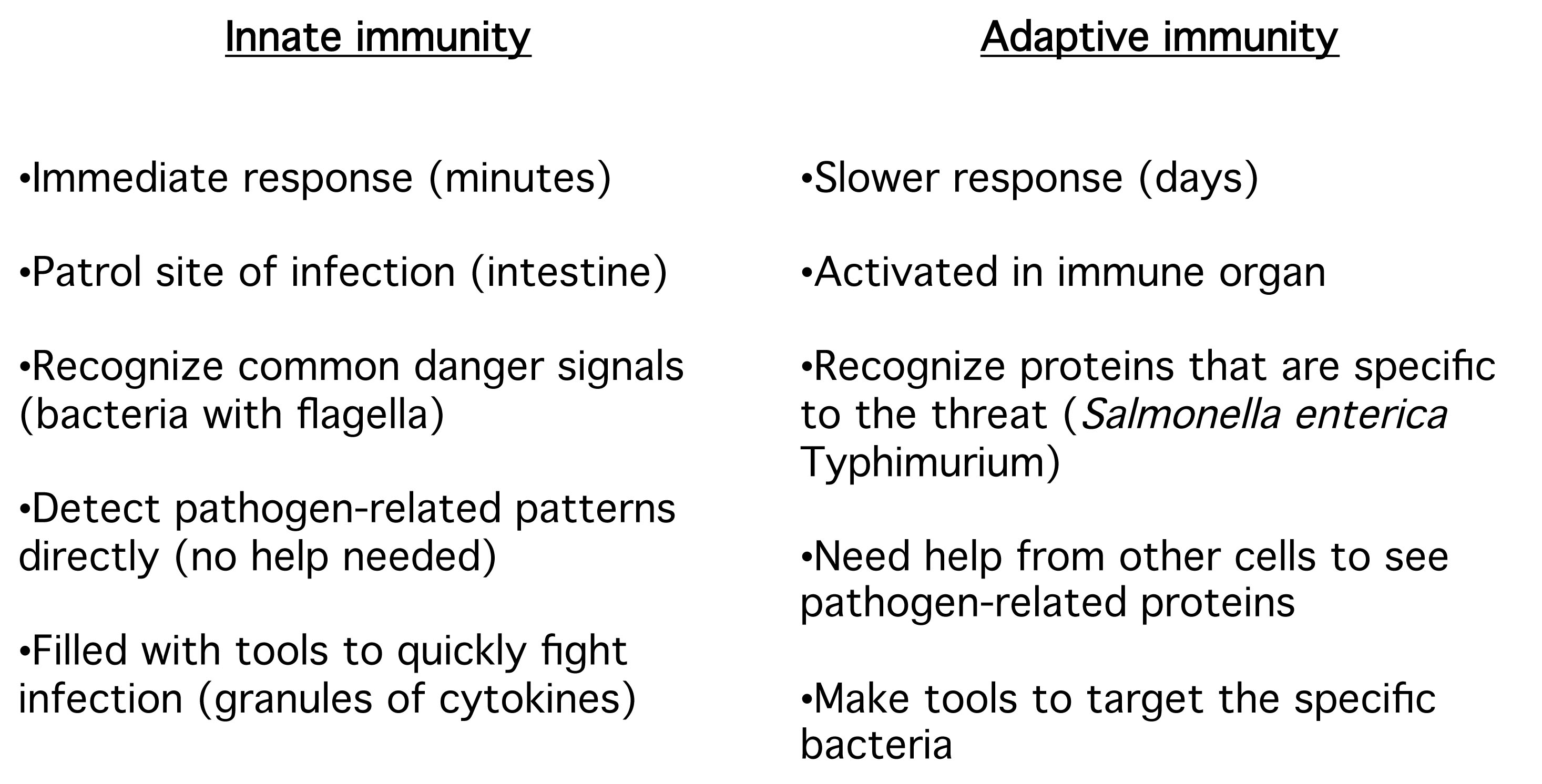diagram of adaptive immune response flow 25 hp johnson outboard parts myeloid cells your immunology