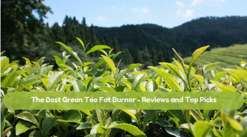 The Best Green Tea Fat Burner In 2018 – Reviews and Top Picks
