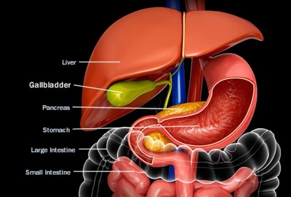 Can-You-Live-Without-A-Gallbladder-01