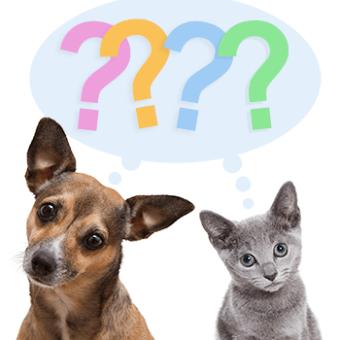Questions Dog & Cat